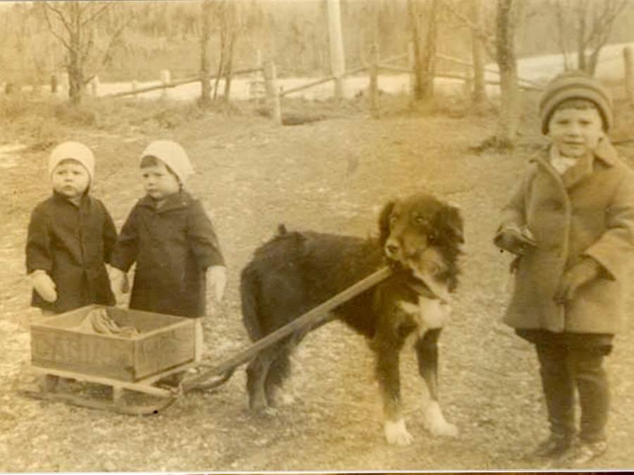B3 - Dog sled. Unidentified children, Vincent family, c 1915