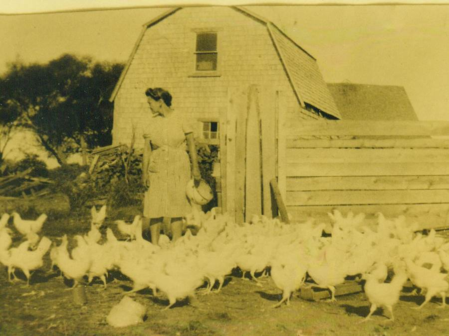 B5 - Pomquet chicks, c 1940s