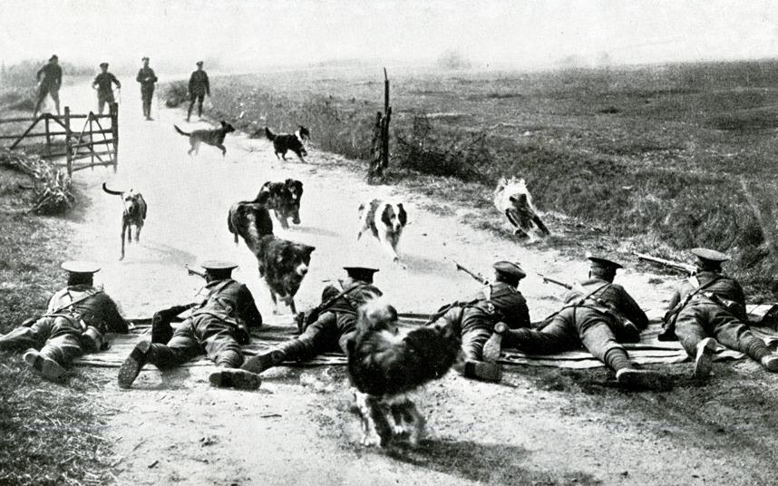 Dogs of War Meenger Dogs Bishopsgate Institute Exhibition 2015